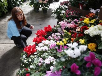 Christine T. Nguyen—The North State Journal