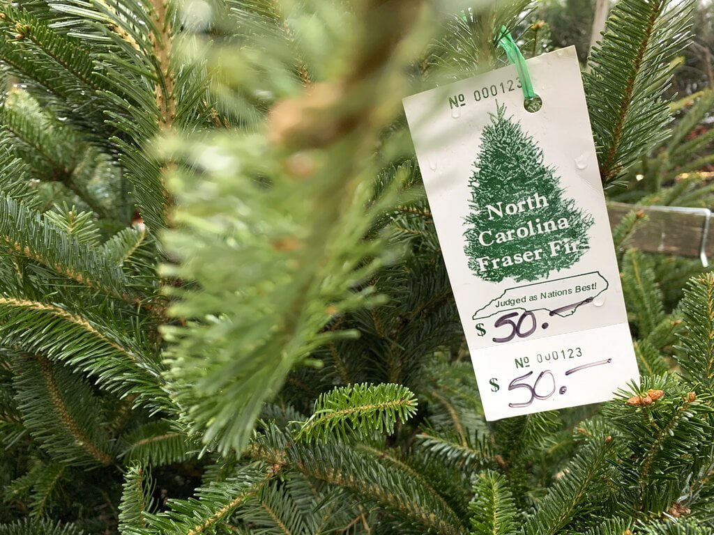 Christmas Tree Supply 2021 Us Christmas Trees Supplies Tight Prices Up The North State Journal